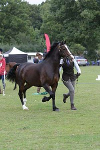 Dacorum & District RC September Show 2017